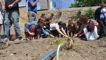 El interés por la frutilla no es sólo a nivel productivo, sino que ya atrae a cientos de familias de Neuquén que las plantan en sus huertas o en macetas.
