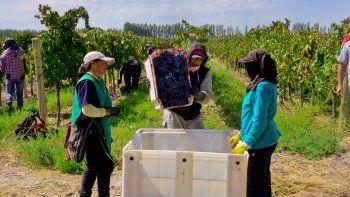 La actividad vitivinícola genera más de 100.000 puestos de trabajo.