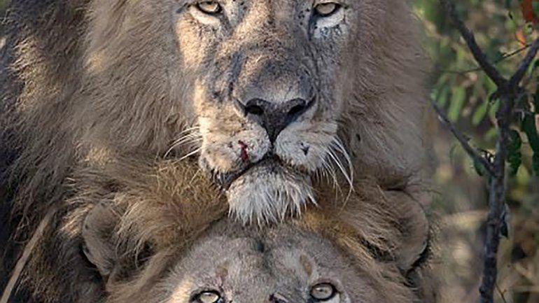 kenia leones gay