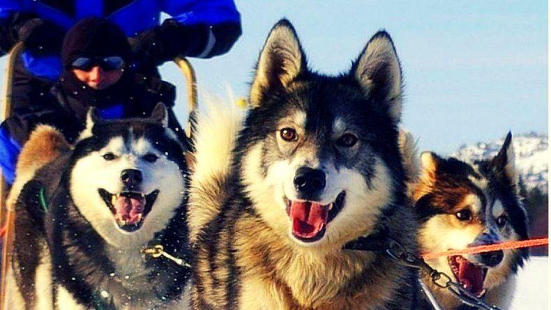 En España prohibieron cortar la cola y las orejas de los perros