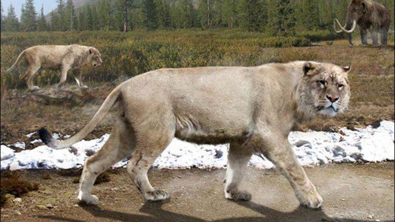 Científicos develaron que fósiles hallados en el siglo XIX que están en el Museo de La Plata son de esta especie.