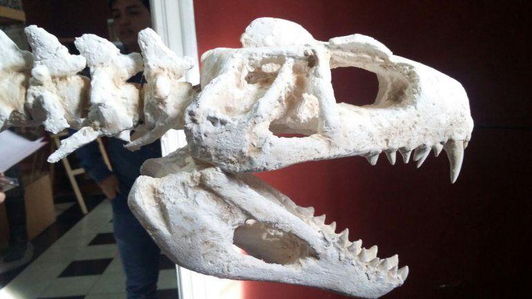 El paleontólogo Flavio Bellardini