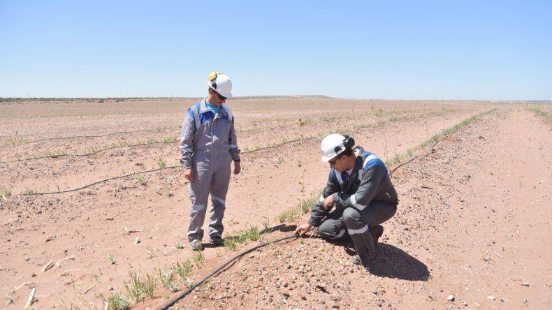Las empresa reutiliza el agua que destina a refrigerar en la generación eléctrica. Antes terminaba en el Neuquén y ahora la llevan hasta la alameda. Se usan 60 mil litros por hora para el goteo.