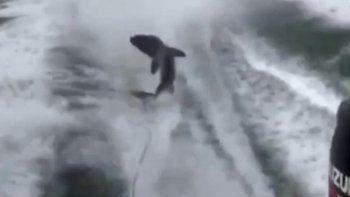 Un cazador de tiburones subió el video para que los detuvieran.