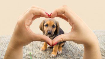 Si no podés llevar a tu mascota, garantizale un cómodo lugar respetando sus necesidades.