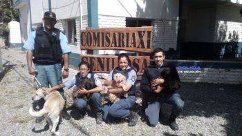 rescataron a cinco perros abandonados en una casa