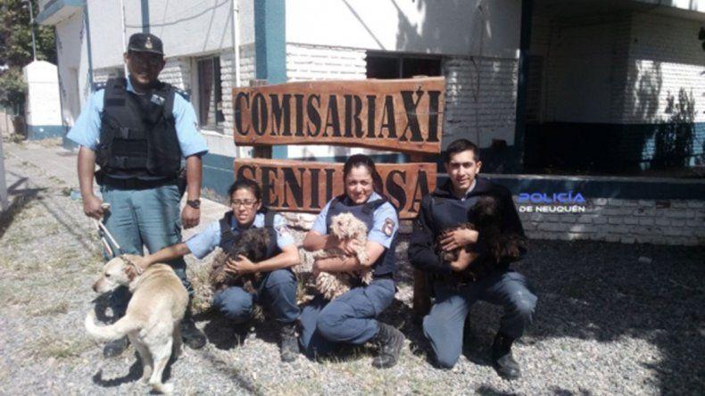 Rescataron a cinco perros que estaban abandonados en el patio de una casa