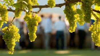 Es la variedad más plantada en el mundo pero también una de las más plásticas en estilo. En nuestro país hoy redefine sus límites y ofrece mejores vinos.