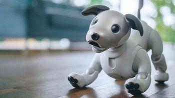 japon: pusieron a la venta un perro-robot y se agoto