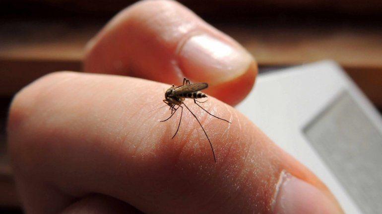 Estos insectos localizan olores ya que tienen detectores térmicos para reconocer sustancia volátiles y