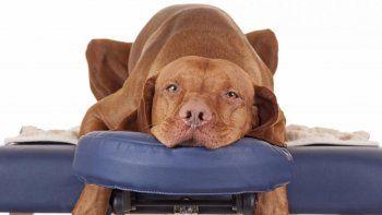 Para combatir los problemas físicos o psicológicos, hay una gran variedad de tratamientos.