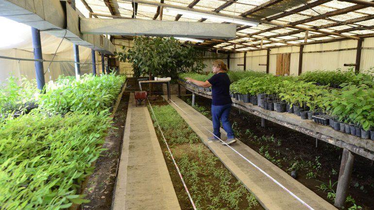 Durante el 2017 se entregaron plantas en neuqu n for Viveros en neuquen