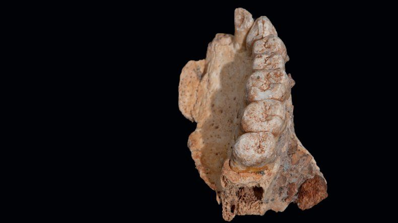 Hallan al Homo sapiens más antiguo de todos