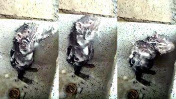 ¿Real o trucado? El video del ratón que se baña que se hizo viral