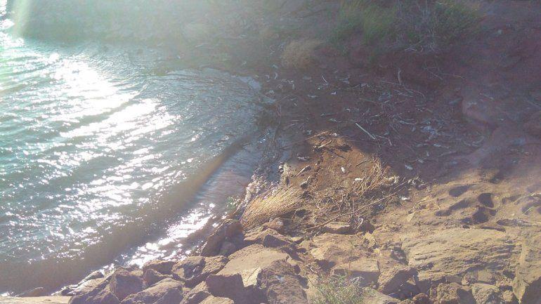 Encuentran decenas de peces muertos en El Chocón