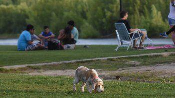 lmn y lu5 te invitan a disfrutar el paseo de la costa con tu mascota