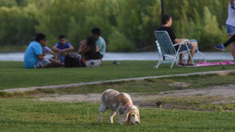 Fueron al río con el perro y se tuvieron que volver