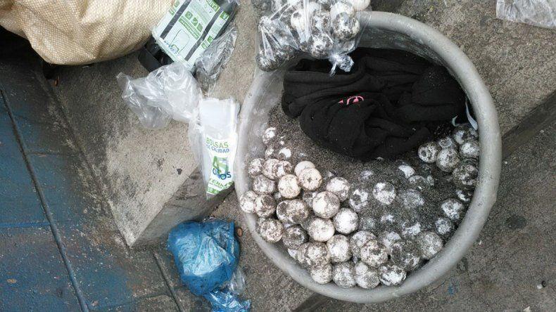 Los ladrones habían robado los huevos de una playa de Florida.