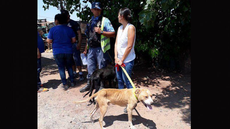 Rescataron tres perros desnutridos, uno murió y el resto está en adopción