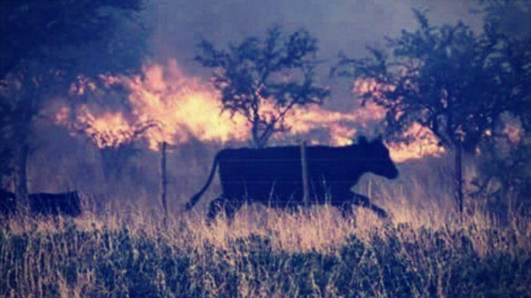 Las altas temperaturas provocan nuevos focos de incendios en La Pampa