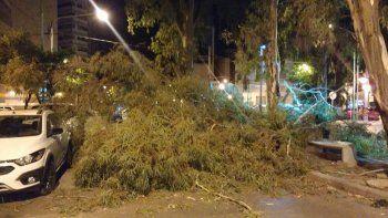 El viento derribó un viejo árbol en pleno centro