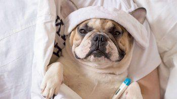 Las convulsiones de las mascotas familiares suelen impresionar, en especial a los niños.