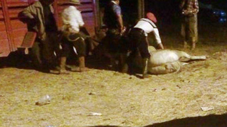 Murió un caballo durante una jineteada en la Fiesta del Puestero