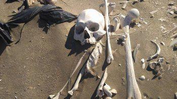 los esqueletos de peninsula valdes son de 3 mil anos atras
