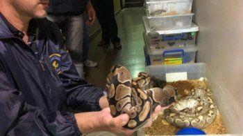 Los reptiles del departamento estaban destinados al comercio ilegal.