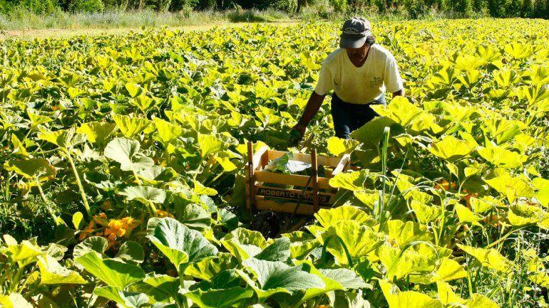 Nación les compró un tractor a hortícolas bolivianos