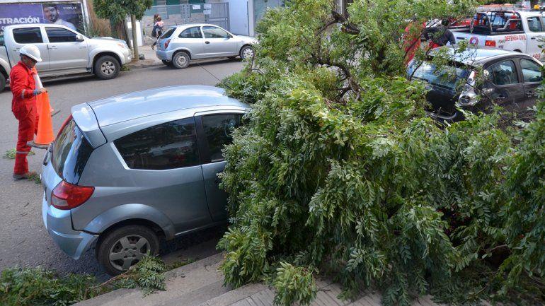 Defensa Civil llegó al lugar para cortar otro árbol que también podría ser derribado por el viento.