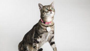 Los pros de los collares en los gatos