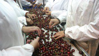 Cereza: crecen los envíos al mundo, pero se pierde contra Chile