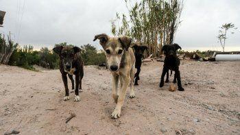 poblacion canina: en la ciudad hay 90 mil perros