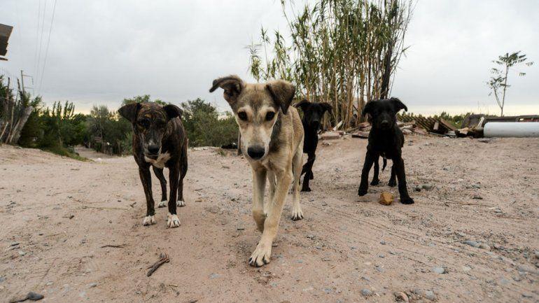 En la ciudad hay alrededor de 90 mil perros