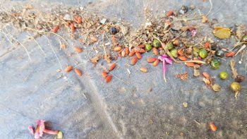 Preocupación en barrio Huiliches por veneno en las veredas