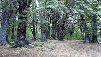 Bosque en el Parque Nahuel Huapi