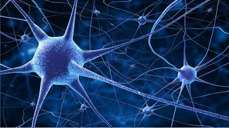 La ciencia dice ahora que el cerebro nunca para de crecer
