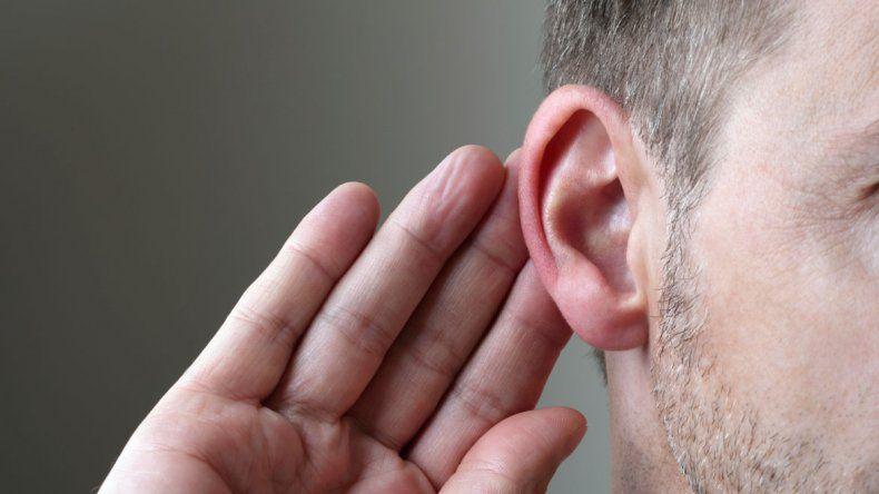 En un estudio se modificó la forma de las orejas y eso influyó.