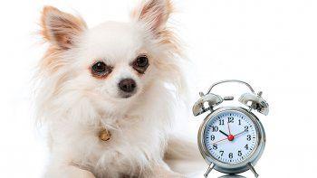 Por su olfato, los canes saben la hora