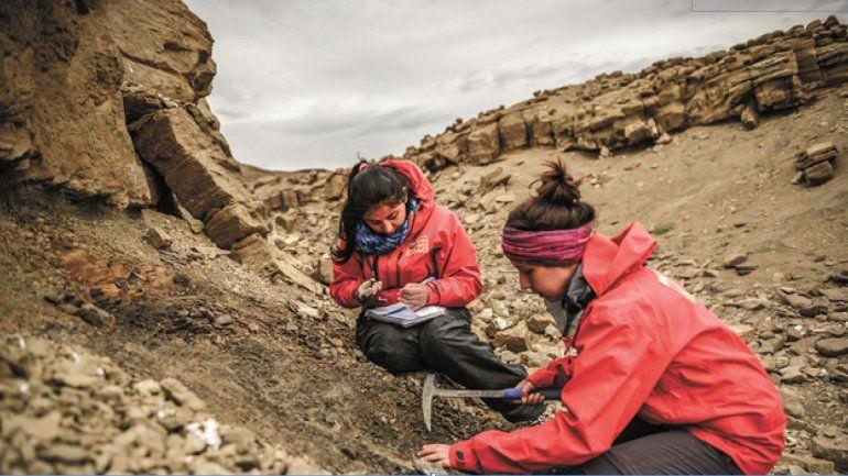 La misión se centró en el sector de cerro Guido-Valle de las Chinas. Las especies articuladas o semi entregan gran información del animal.