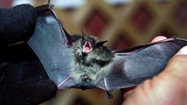La Muni activó un protocolo de vacunación de mascotas por el murciélago rabioso