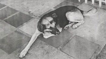 Insólito operativo para capturar un perro prófugo