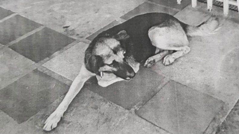 Insólito: once inspectores buscan a un perro con pedido de captura