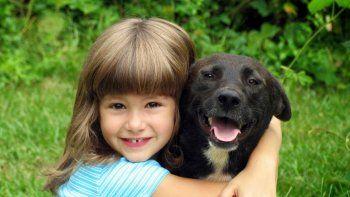 El proceso comienza desde cachorro, cuando se lo ayuda a que pierda el miedo con cariño.