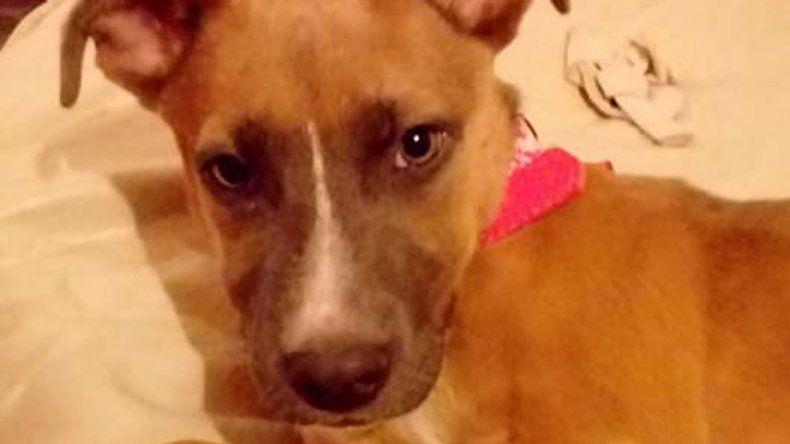 Buscan una perra que fue robada de la puerta de una casa