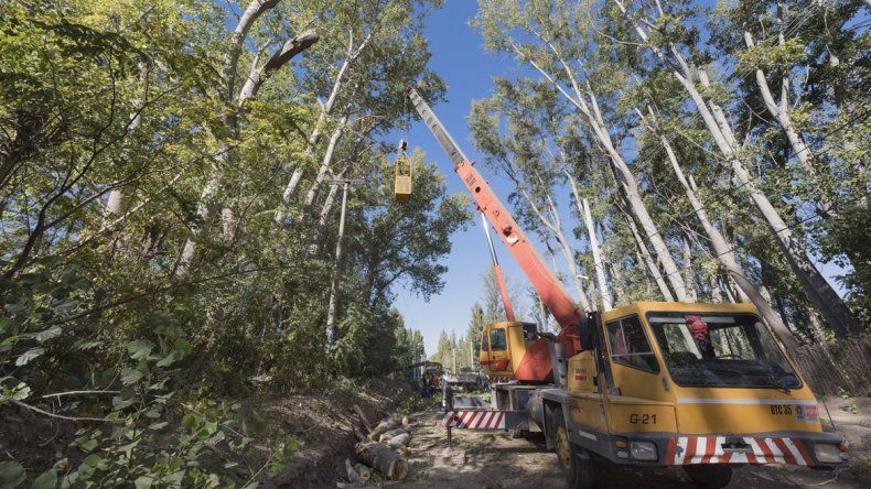 CALF realizó una intensa poda de árboles en el barrio Confluencia