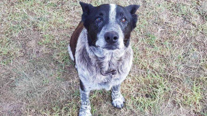 Un perro sordo y ciego ayudó rescatar a una niña de 3 años que estaba perdida