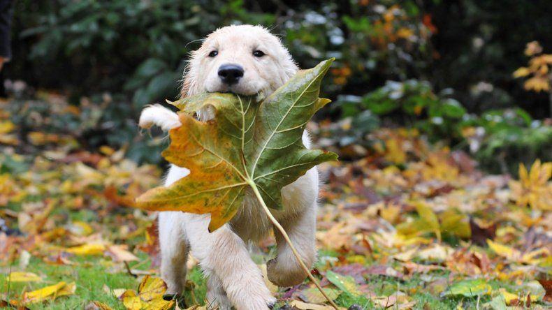 Cómo afecta a las mascotas el otoño