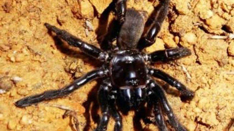 A los 43, murió la araña más longeva de la historia